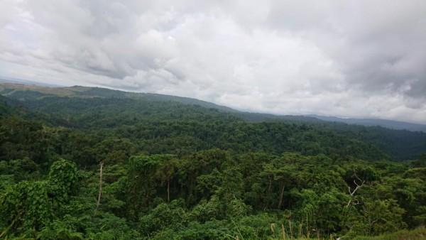丸山道の密林障碍を望見する